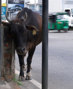 waiting for a bus in Colombo